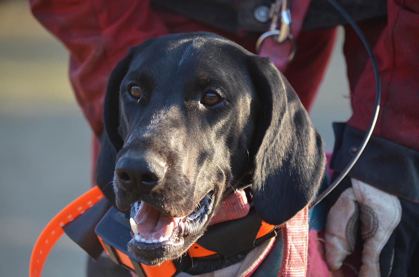 Ronja GPS Sender - Die Stöbermeute vom Berggarten - Hundemeute mieten
