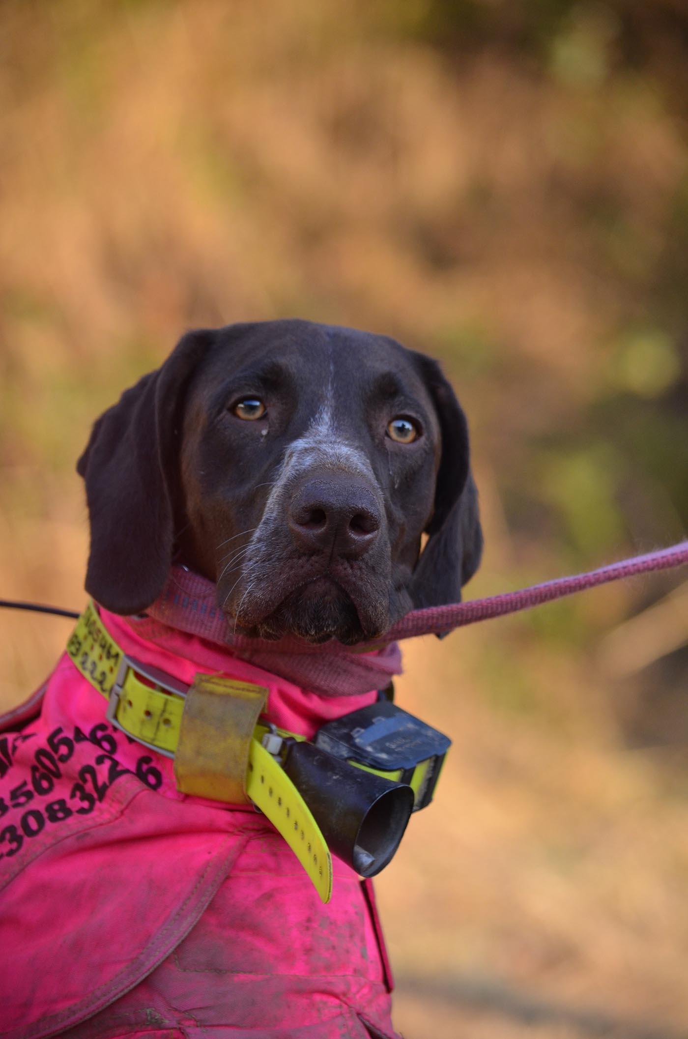 Ronja Schlagschutz - Die Stöbermeute vom Berggarten - Hundemeute mieten